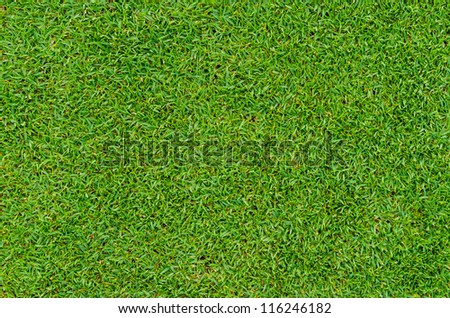 Beautiful green grass pattern from golf course - stock photo