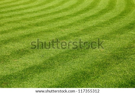 Beautiful green grass texture