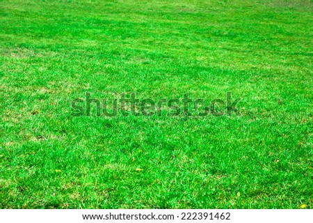 Beautiful green grass texture from a field - stock photo