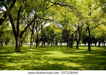 Beautiful green grassy area with shade trees in a park. - stock photo