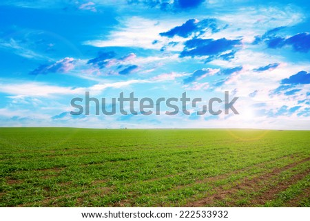 beautiful green herb on the field and celestial landscape