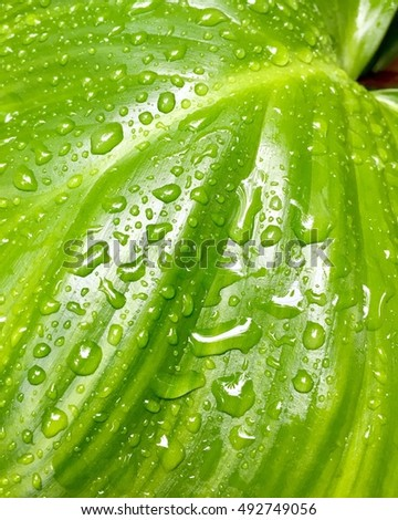 Beautiful green leaf and drops of water in nature background.