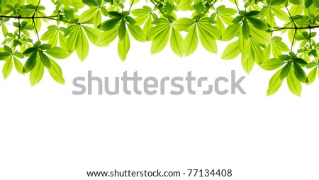 beautiful green leaf frame isolate - stock photo