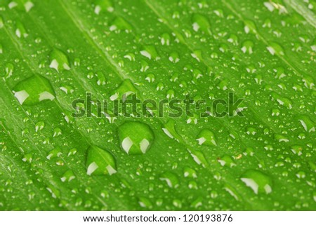 Beautiful green leaf with drops of water close-up - stock photo
