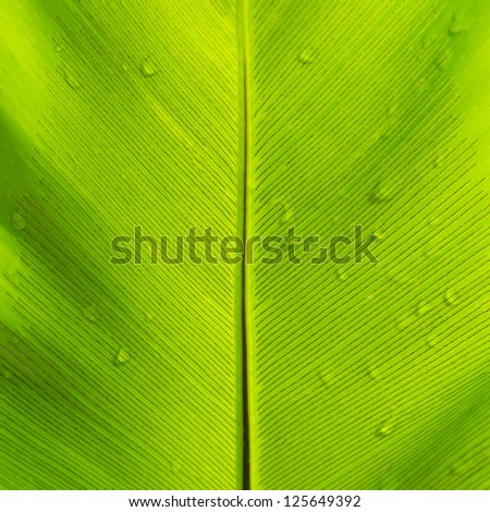 Beautiful green leaf with water drops - stock photo