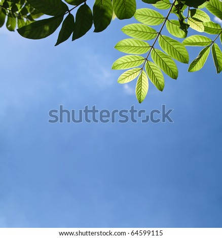 Beautiful green leafs with texture detail in cleaning blue sky - stock photo