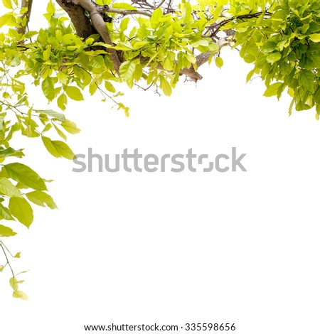 Beautiful Green leaves frame on white background,beautiful color , fresh green leaf  summer season , spring summer background,for background and product - stock photo