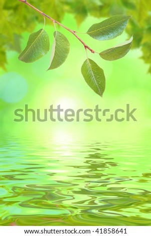 Beautiful green leaves in spring with reflection - stock photo