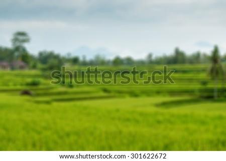 Beautiful green lush rice terrace fields in Bali - stock photo