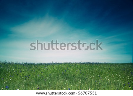 Beautiful green meadow with a great blue sky - stock photo