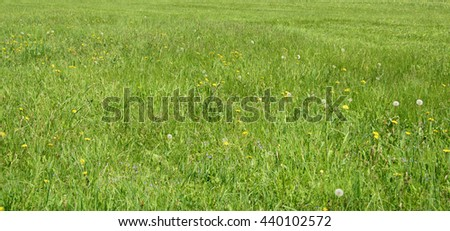 Beautiful green meadow with nice dandelions. Wonderful rural landscape. Amazing grassland with wildflowers. Summer countryside environment. Herbs on a nice lawn.. Green pasture in countryside.  - stock photo