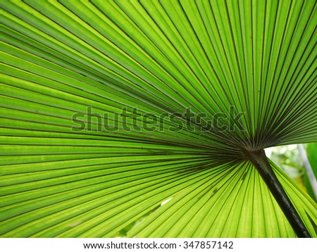 beautiful green palm leaf background texture