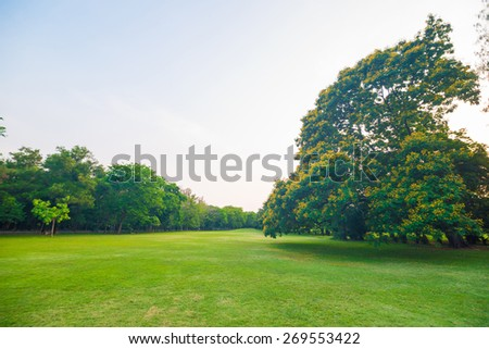 Beautiful green park at sunset , Serenity scence - stock photo