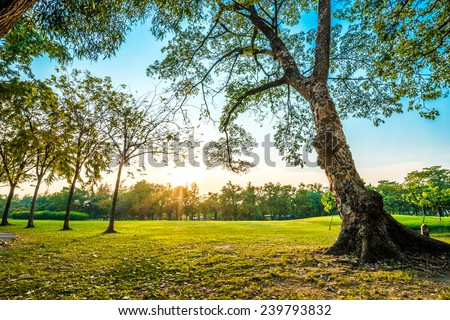 Beautiful green park, Public park with green grass field and tree - stock photo