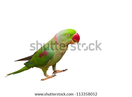 Beautiful green Parrot isolated on white with clipping path. - stock photo