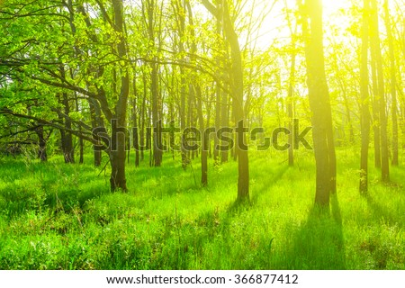 beautiful green spring forest scene - stock photo