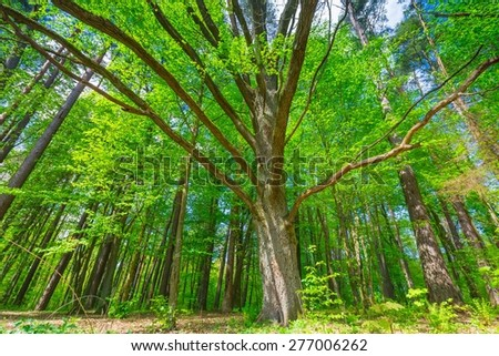 Beautiful green springtime forest landscape. European natural forest with fresh green young leaves. Good weather landscape. - stock photo