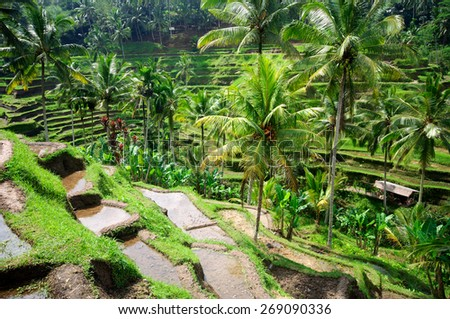 Beautiful green terrace paddy fields on Bali, Indonesia - stock photo