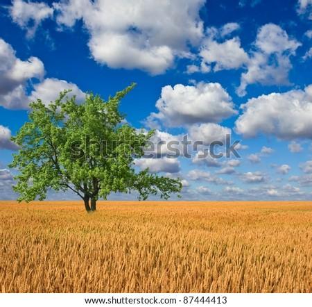 beautiful green tree in a wheat field - stock photo