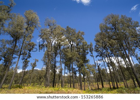 Beautiful green trees on blue sky - stock photo