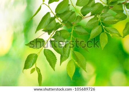Beautiful green twig on green background