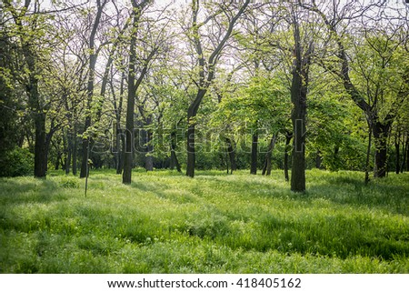 Beautiful green view in the park - stock photo