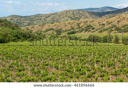 Beautiful green vineyards on fields in mountains of Crimea