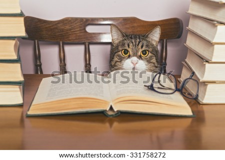 Beautiful grey cat sits at a table, surrounded by piles of books - stock photo