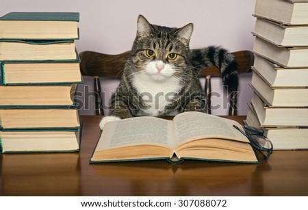 Beautiful grey cat sits at the table, surrounded by piles of books - stock photo