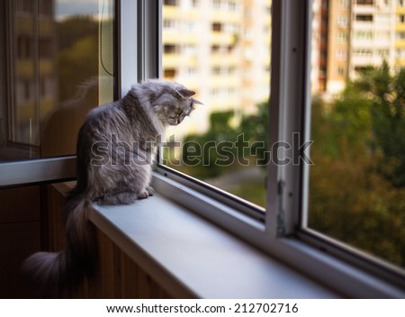 Beautiful grey cat sitting on a windowsill and looking to the window - stock photo