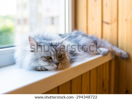 Beautiful grey cat sleeping on windowsill  - stock photo