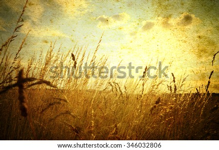 Beautiful grunge background with meadow of grass - stock photo