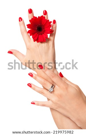 Beautiful hands of an elegant woman with fashionable red manicured nails, gemstone rings and a fresh red Gerbera daisy on a white background in a glamour and beauty concept - stock photo