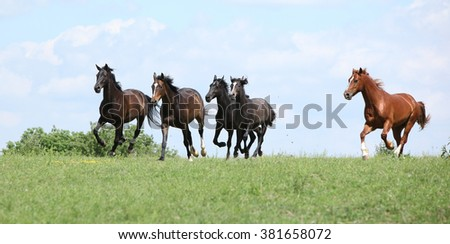 Beautiful herd of horses running together on pasturage - stock photo