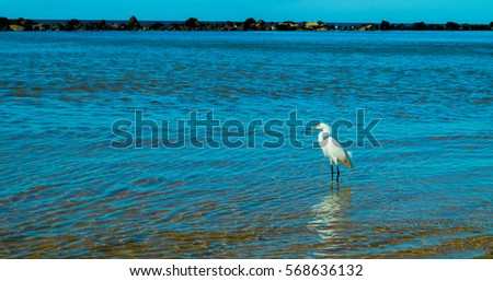 Beautiful Heron on the beach Sunrise – fishing