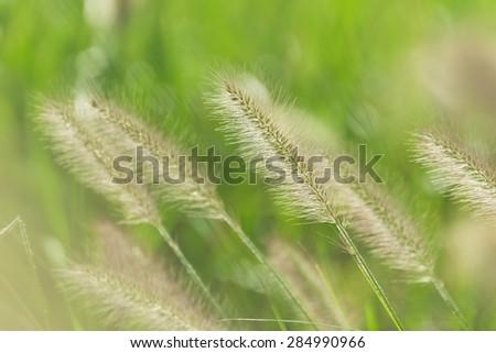 Beautiful horizontal background of Hameln grasses  - stock photo