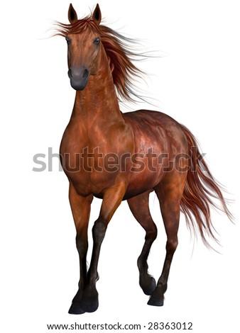 Beautiful Horse - stock photo