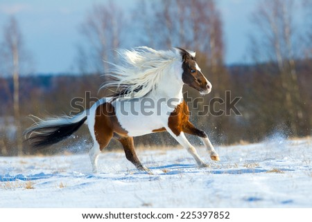 Beautiful horse gallops in the snow in winter - stock photo