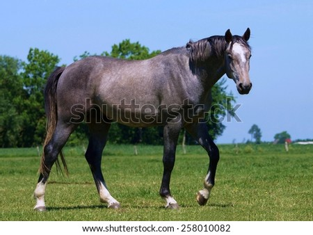 Beautiful horse in a paddock