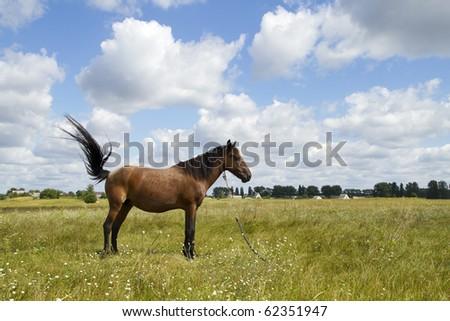 beautiful horse on field - stock photo