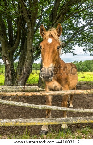 Beautiful horse on field behind wooden fence, rural farm, country landscape - stock photo