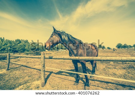 Beautiful horse on the field or ranch behind wooden fence, vintage rural landscape - stock photo