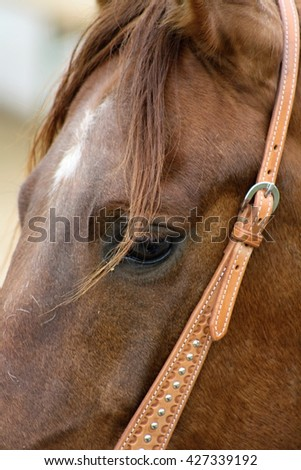 Beautiful horse outdoor on meadow. Western riding horse from farm. Horse with interesting color. Lovely and cute horse. Horse breed for western or jumping. Animal shot capturing horse. - stock photo