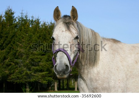 Beautiful horse outdoors on a sunny day alert and curious