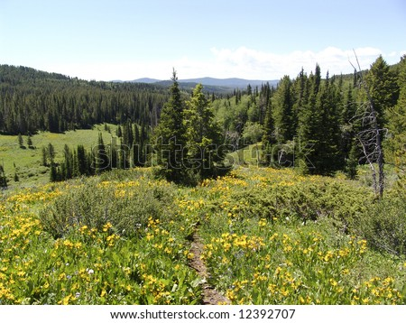 Beautiful horse trail in Jackson Hole, Wyoming, as seen from on top of a horse - stock photo