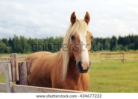 Beautiful horse with a long mane standing behind the fence. Stable on a farm. Summer fields in the country. Stud farm. - stock photo
