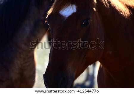 Beautiful Horses grazing in the grass on the prairie - stock photo