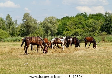 Beautiful horses on a farm in a summer  meadow