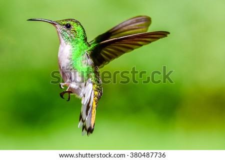 Beautiful Hummingbird with amazing colors - stock photo