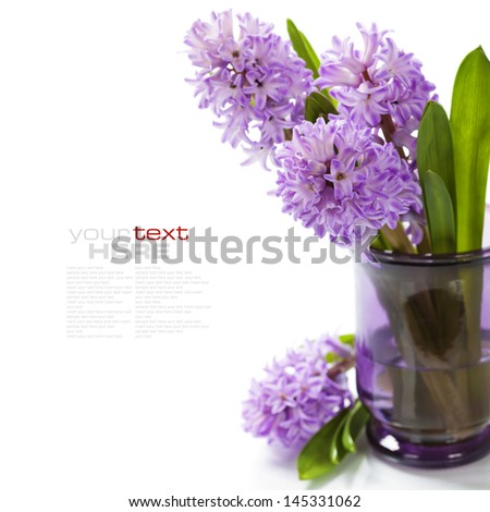 Beautiful Hyacinths in vase over white (with easy removable sample text)